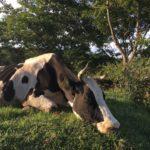 日本での牧場研修について。